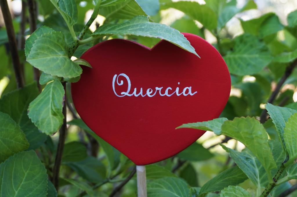 Centrotavola-Cuori-Rossi-Bastoncino-Quercia