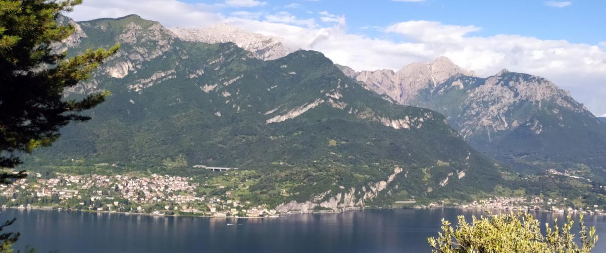 Albero sul lago